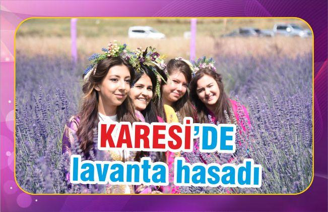 KARESİ'DE LAVANTA HASADI